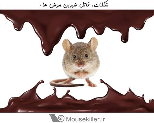 شکلات از مواد کشنده برای موش محسوب می شود