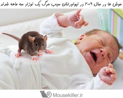 خطرات ناشی از موشها