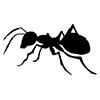 ant-black-logo