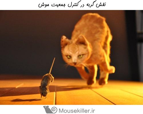 رفتار موش