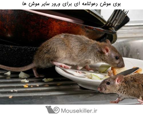 بویایی موش