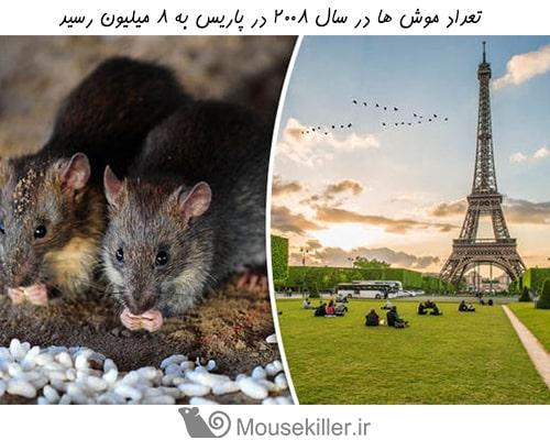 ده شهر با بیشترین تعداد موش