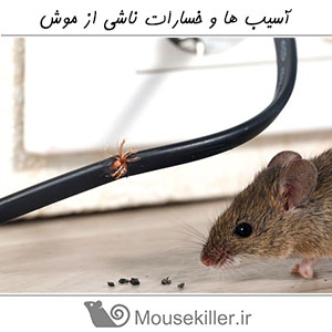 Damage Of Mouse