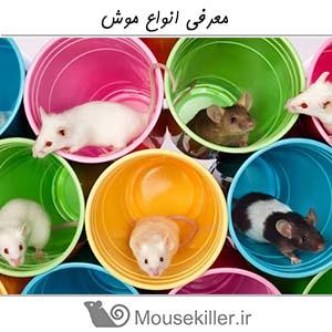معرفی انواع موش