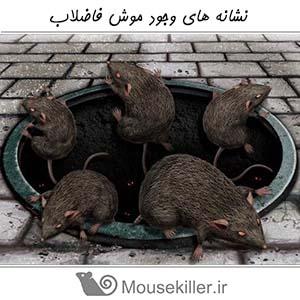 نشانه های وجود موش فاضلاب
