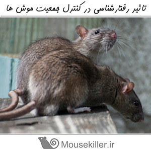 Mouse Population Control12