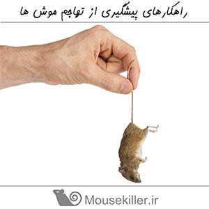 راهکارهای پیشگیری از تهاجم موش