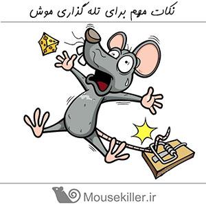 نکات مهم در مورد تله گذاری موش