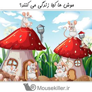 محل زندگی موش