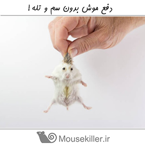 دفع موش بدون سم و تله