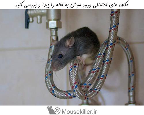 مکان های مشکوک ورود و پنهان شدن موش ها در خانه، را پیدا کنید