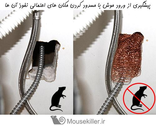 برای پیشگیری از ورود موش به خانه تمام منافذ موجود را مسدود کنید
