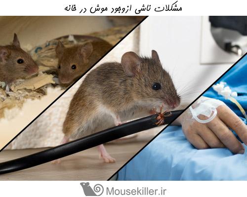 موش ها می توانند عامل مشکلات زیادی در خانه باشند